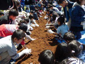 カブトムシの幼虫掘り体験
