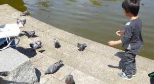 鳩を追いかけまわす我が子