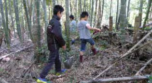 竹林の様子
