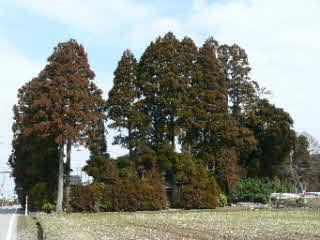 生い茂る立派な屋敷林