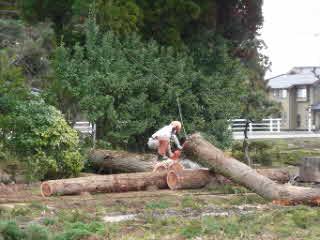 屋敷林伐採の様子2