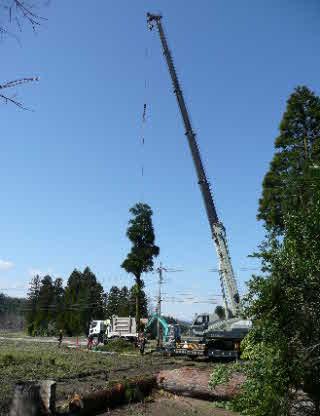 クレーンでの木の吊るし切り